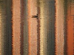 Плывут утки * природа * цифровая фотография