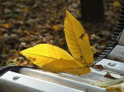 Лист, солнце и скамейка * пейзаж * цифровая фотография