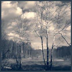 Простой среднерусский пейзаж с березами * пейзаж * цифровая обработка фотографий