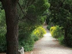 Дорожка в парке у моря * пейзажи парков и садов * цифровая фотография